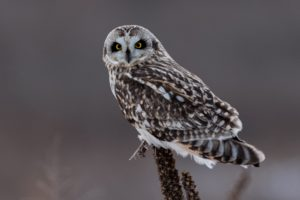 Owl perched on a stick
