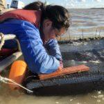 Inserting-fish-in-cage-e1554845440861
